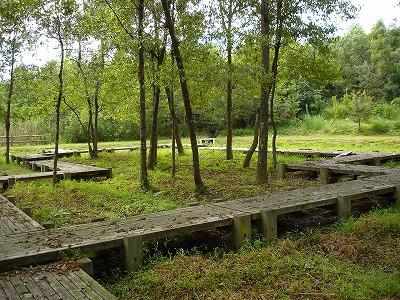 秋ですね。上野森林公園_d0055236_223924.jpg