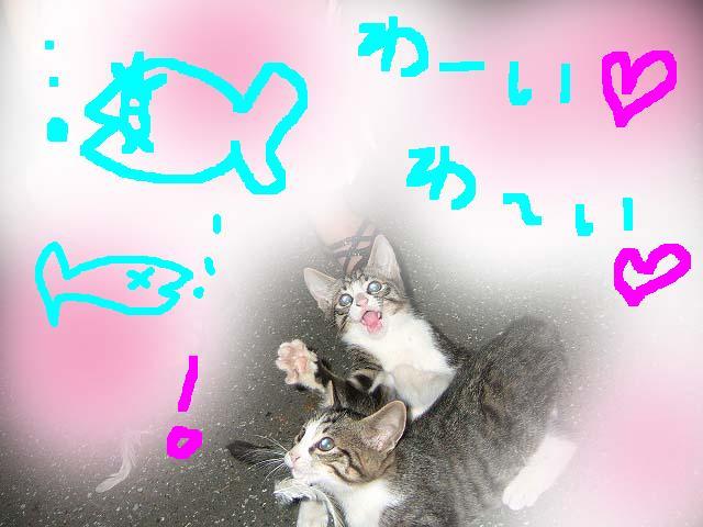 カレー日和♪にゃー_c0038078_304721.jpg