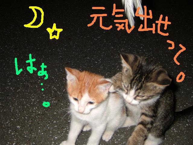 カレー日和♪にゃー_c0038078_344624.jpg
