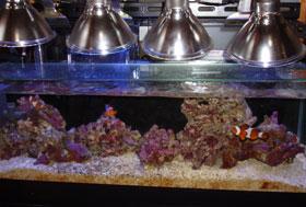 珠洲市蛸島町のお祭り キリコはすごい豪華_b0033490_1248360.jpg