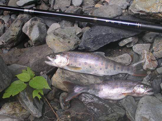 渓流 釣り納め_e0048413_23375422.jpg