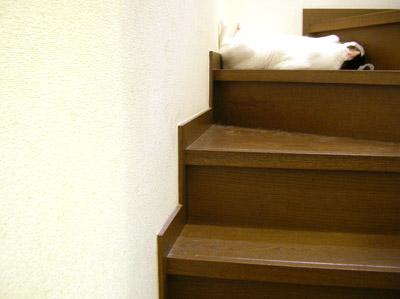 そんなところで寝られると邪魔なんですけど・・・_a0028451_2115736.jpg