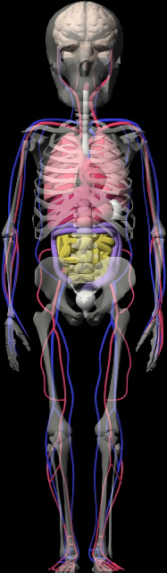 肝臓の位置_e0073240_1365396.jpg