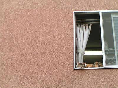 窓辺にて・・・_a0028451_1303683.jpg