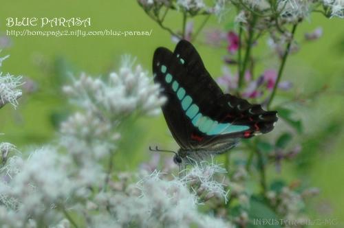 Butterfly_d0040908_21565245.jpg