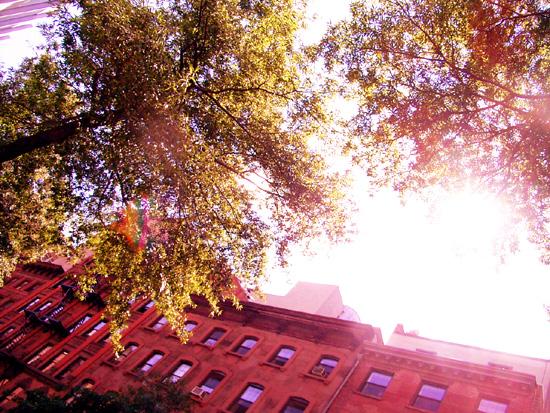 飽きない秋のニューヨーク_b0007805_1064312.jpg