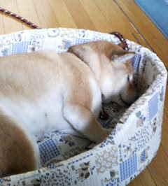 飼い犬の心配事_c0049950_20335620.jpg