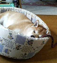 飼い犬の心配事_c0049950_20362485.jpg