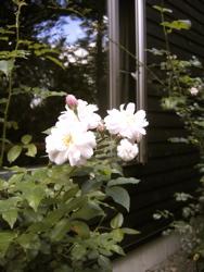庭に想う。_d0028589_22492065.jpg