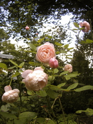 庭に想う。_d0028589_2249443.jpg