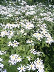 庭に想う。_d0028589_22504781.jpg