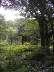庭に想う。_d0028589_23101590.jpg