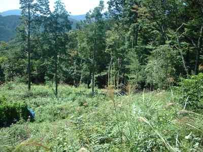 2005 秋の下草刈り_c0069972_16183116.jpg