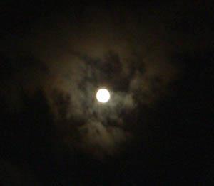 十五夜お月さん_d0000995_9372199.jpg