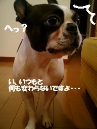 d0041575_214463.jpg