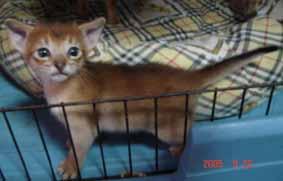 アビシニアン子猫3週目_e0033609_17371333.jpg