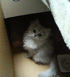 猫飼った~☆_e0044941_23534712.jpg