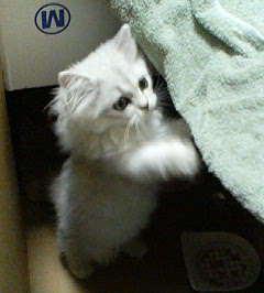 猫飼った~☆_e0044941_23545146.jpg