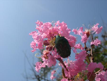 ■ヒガンバナの咲く頃…_e0046474_9335664.jpg