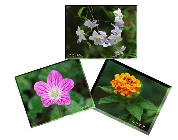 庭の片隅_c0051105_1682753.jpg