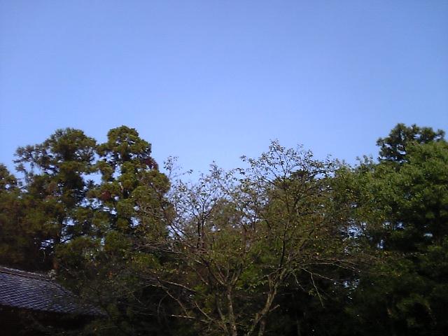 b0046100_10412634.jpg