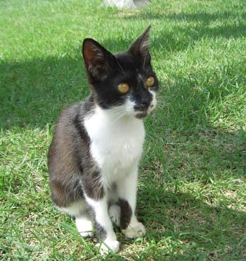 猫_d0000995_14513349.jpg