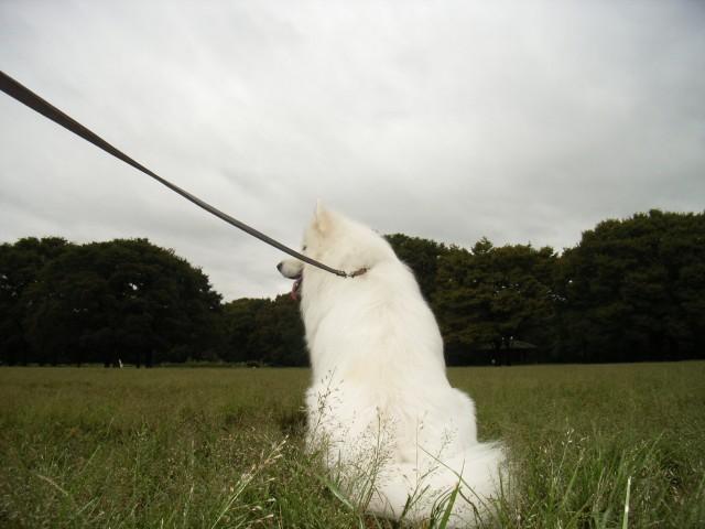 お散歩強行軍_c0062832_1217133.jpg