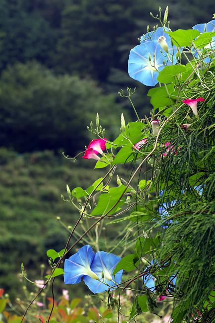 庭先の花_c0054876_6344376.jpg
