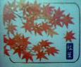 d0015486_13477.jpg