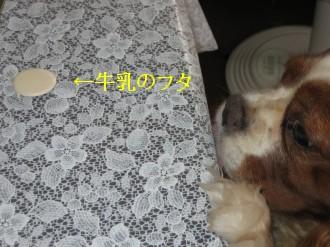 e0080406_12502335.jpg