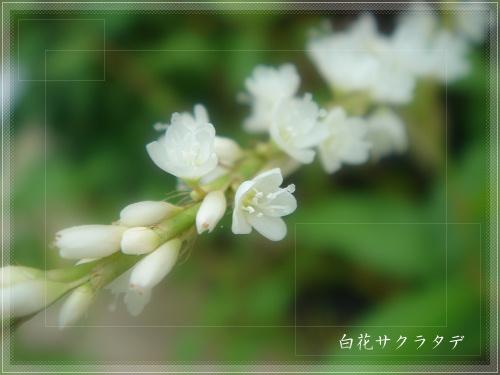 b0009845_2132085.jpg
