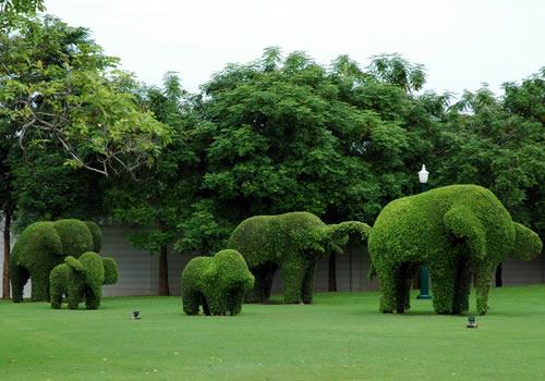 タイの植木職人_b0016049_2351782.jpg