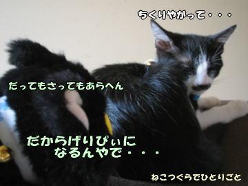 b0041182_1039384.jpg