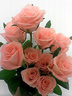 バラの花を長持ちさせてみよう_c0053520_0202674.jpg