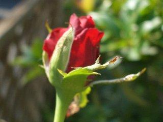 b0061107_2364787.jpg