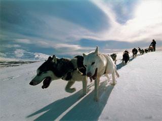 海外の広告に犬ぞりが増えたな!_d0052419_8274267.jpg