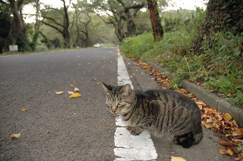 小学生のパンチラスレ 19人目 [無断転載禁止]©bbspink.com->画像>4794枚