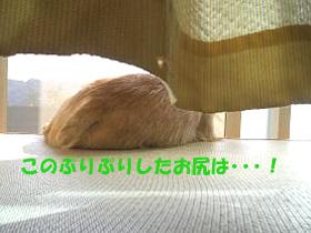 d0043478_0142771.jpg