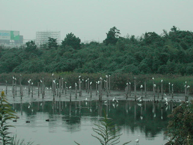 ■鳥類園最新情報・臨時ニュース!_e0046474_1591987.jpg