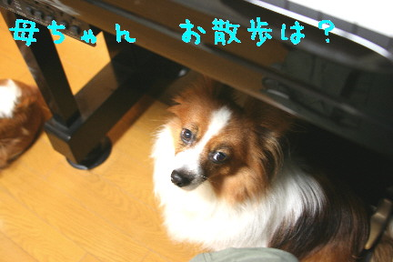 d0013149_091014.jpg