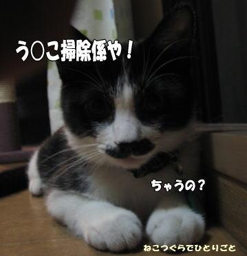 b0041182_952546.jpg