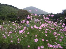 秋の花便り_e0093046_2214742.jpg