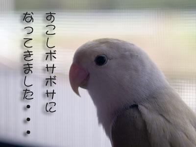 d0010868_183398.jpg