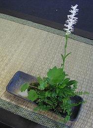 こけ玉、ミニ盆栽、多肉のミニ寄植え・・・鉢の受け皿。_e0063296_16103441.jpg