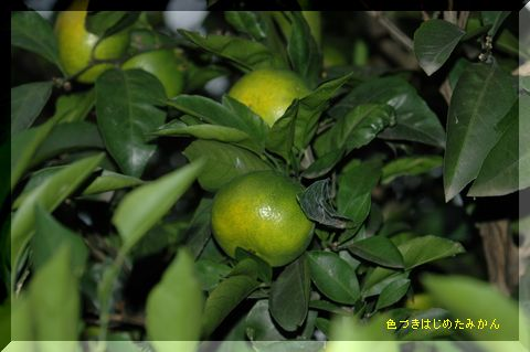 庭の手入れ_c0051105_0133245.jpg