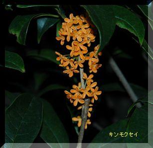 庭の手入れ_c0051105_0134374.jpg