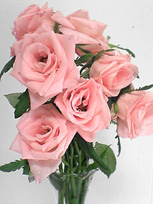 13日間キレイに咲いてくれましたっ_c0053520_19285255.jpg