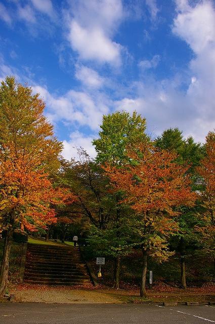 カツラの紅葉~鶴来樹木公園_d0043136_13475850.jpg
