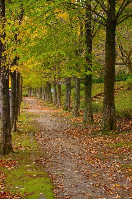 カツラの紅葉~鶴来樹木公園_d0043136_1348151.jpg