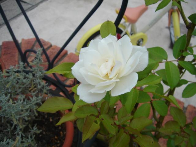 秋の庭_e0086738_003198.jpg
